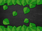 Blackboard with green leaves — Stock Photo