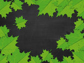 Blackboard with green maple leaves — Stock Photo