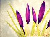 Spring crocuses — Foto de Stock