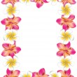 Vector de stock : White and pink frangipani flowers frame