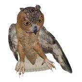 Eagle Owl — Stock Photo