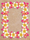 Frangipani frame on sand — Stock Photo