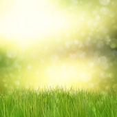 Green grass on abstract background — Stock Photo