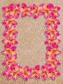 Pink frangipani frame on sand — Stock Photo
