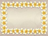 White plumeria flowers frame — Stock Photo