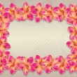 Pink plumeria flowers frame — Stock Photo