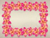 Pink plumeria flowers frame — Stock Photo