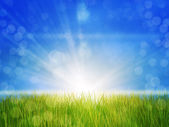 Sunny grass field — Stock Photo