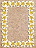 White plumeria frame on sand — Stock Photo