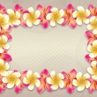 Plumeria flowers frame - Stock Photo