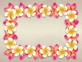 Plumeria flowers frame — Stock Photo