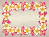 Plumeria flowers frame — Stock Photo