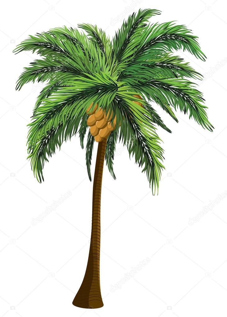 Palmera con coco archivo im genes vectoriales artshock - Como hacer una palmera artificial ...
