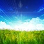 Green field — Stock Photo #23595295