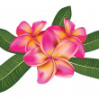 Pink plumeria with leaves — Stock Vector #23860475