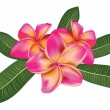 Pink plumeria with leaves — Stockvectorbeeld