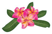 Pink plumeria with leaves — Stock Vector