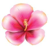 Pink hibiscus — Stock Vector