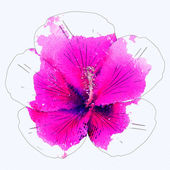 Watercolor pink hibiscus — Stock Photo