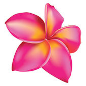 Plumeria flower — Stock Vector