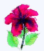 Watercolor red hibiscus — Stock Photo