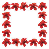 Red hibiscus frame — Stock Vector