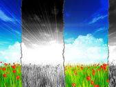 Campo de amapolas con efecto de papel roto — Foto de Stock