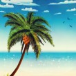 Summer beach and palm — Stock Photo