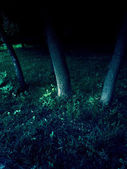 Trees in the dark — Stock Photo