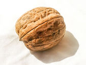 Whole walnut — 图库照片