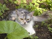Katt i trädgården — Stockfoto