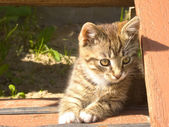 Funny striped kitten — Stockfoto