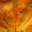 Fall maple leaf texture — Stockfoto