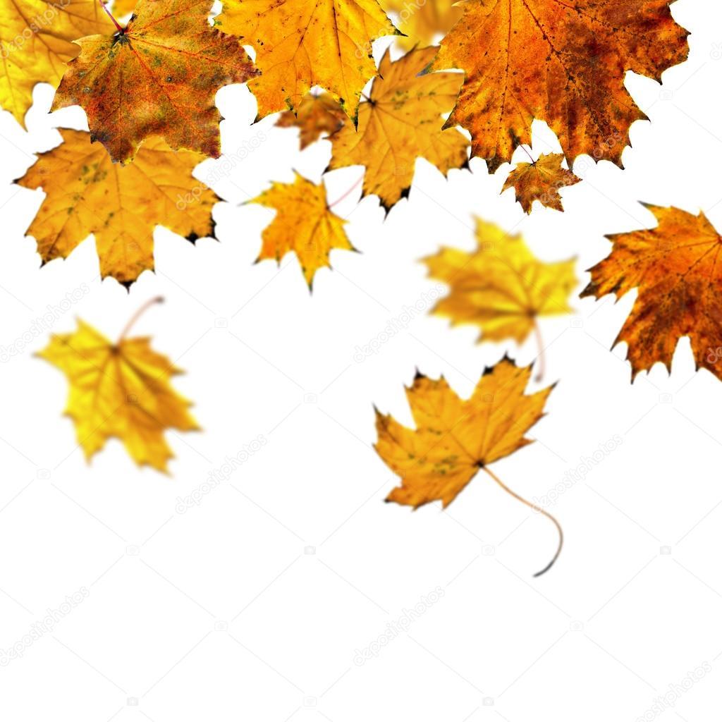Хентай листья клёна 17 фотография