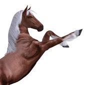 Cavallo rosso con criniera bianca — Foto Stock