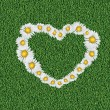 Stock vektor: Daisy heart on grass