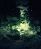 Twilight forest — Stock Photo
