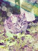Retro portrait cat — Stock Photo