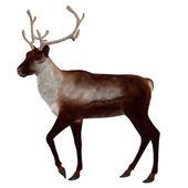 3d Reindeer — Stock Photo