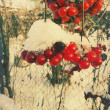 Stock Photo: Winter rowan