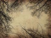 Grunge bare trees — Stock Photo