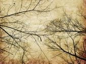 Grunge bare trees silhouettes — Stock Photo