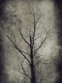 Dark trees — Stock Photo