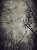 Dark trees — Stock Photo