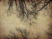 Grunge bare trees — Stock Photo