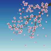 Branch of Sakura over Sky — Stock Vector