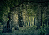 Retro Pine Forest — Stockfoto