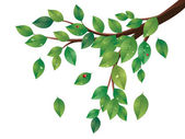 Green Leaves Tree Branch — Stock vektor