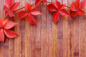 Autumn background of red leaves — Stock Photo