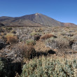 Parque Nacional Del Teide — Stock Photo